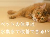 室内飼いの犬猫_アイキャッチ