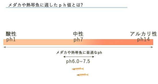 メダカに適したPh値の表