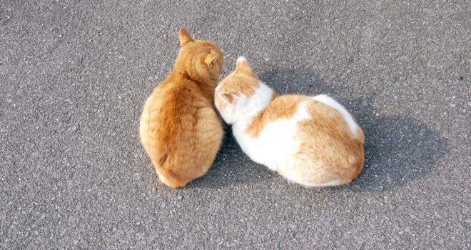 猫の腎不全には水素水