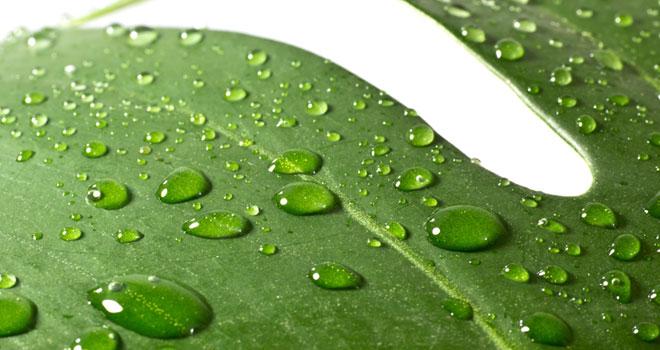 水素水が植物の生長促進に効果的