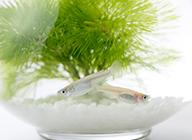 medaka-eyecatch